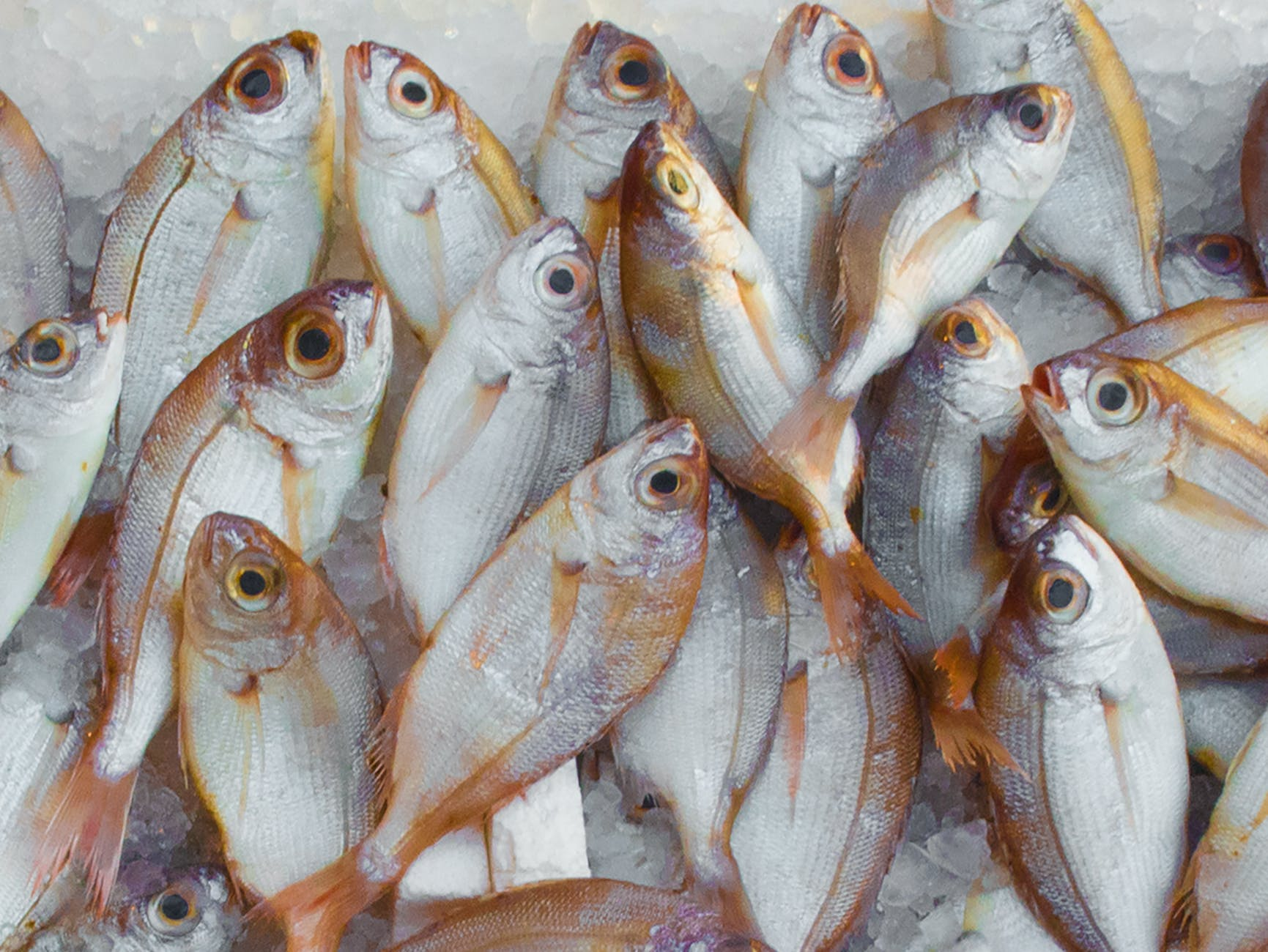 pile of fish